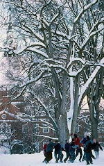 dartmouthwinterplay75.jpg